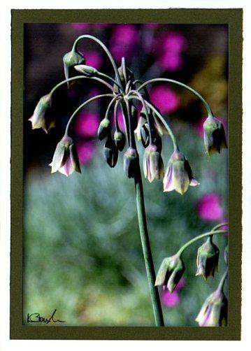 Bell flowers - prtrait