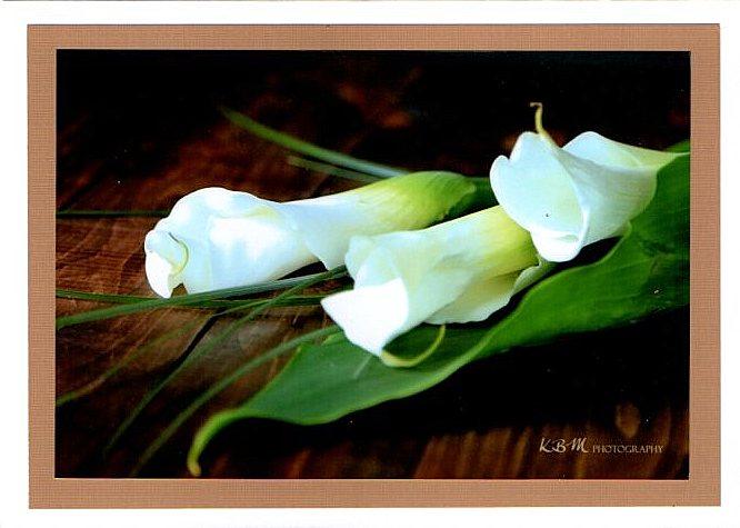 website-calla-lillies