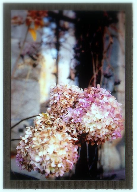 Greeting Cards Fall Flowers1