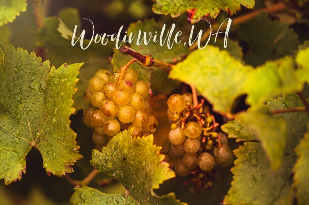 Woodinville Grapes 4